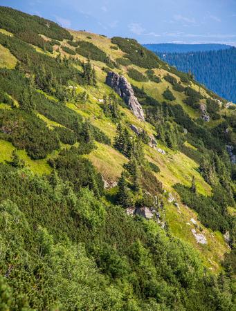 tatry: Forest at Low tatras, Slovakia Stock Photo
