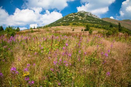 mala fatra: Mountain range Mala Fatra in Slovakia