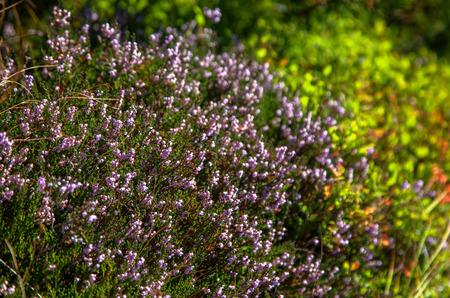 Flora in High Tatras mountains, Slovakia