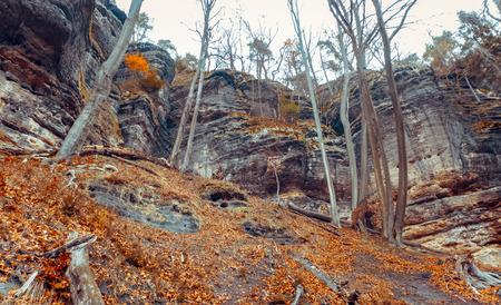 czech switzerland: Forest in czech switzerland