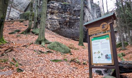 ceske: MEZNI LOUKA, CZECH REPUBLIC - NOVEMBER 10: Autumn forest in National park czech republic on November 10, 2015 in Mezni Louka
