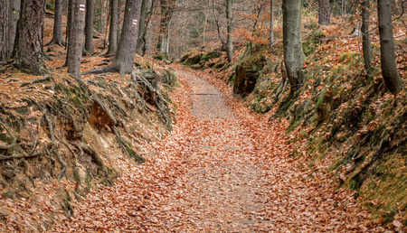 season specific: Autumn leaves in forest, Czech republic Stock Photo