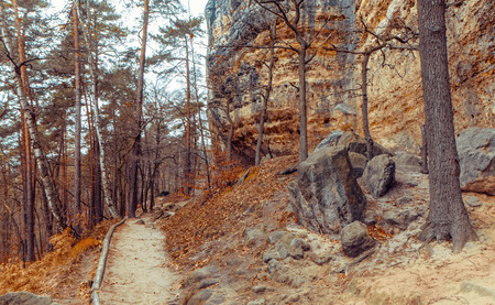 bohemian: Forest in bohemian switzerland