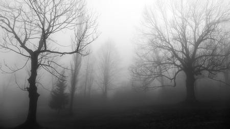 fog: Tree in fog