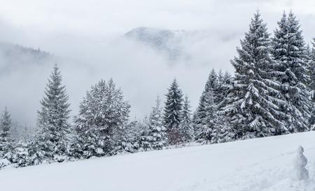 liptov: Snowy forest in region Liptov, Slovakia Stock Photo
