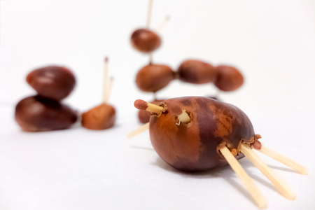 playthings: Toy from chestnuts