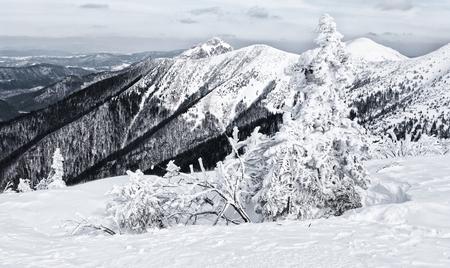mala fatra: Winter in Mala Fatra mountains -  Slovakia