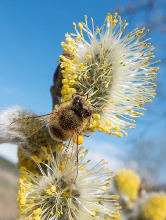 glove puppet: Bee on flower - glove puppet