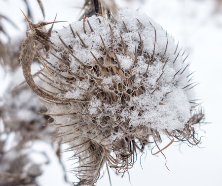 close up view: Thistle - close up view on it Stock Photo