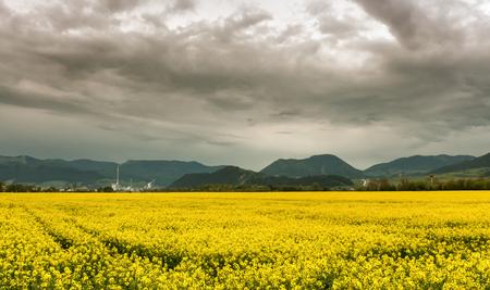 ruzomberok: Rapeseed field and town Ruzomberok -  Slovakia Stock Photo