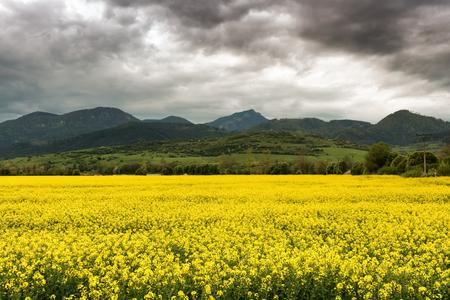 choc: Hill Choc and rapeseed field - Slovakia Stock Photo