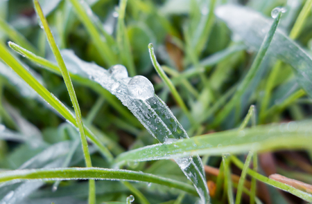 ice crystals: Frozen ice crystals on grass Stock Photo