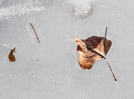 close uo: Frozen leaf in water - close up view Stock Photo