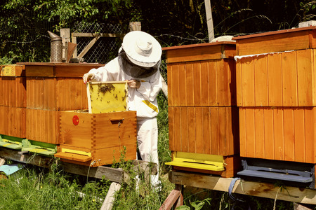 apiculture: Apiculture - beekeeper wtih lot of  bees Stock Photo