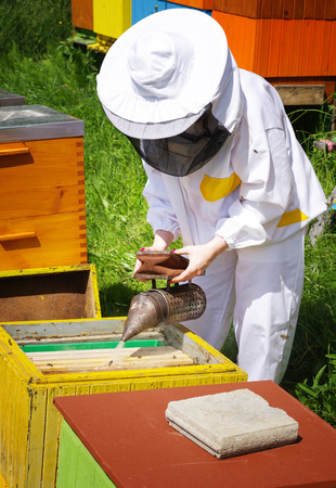 Woman beekeeper in white worksuite with bees Stock Photo