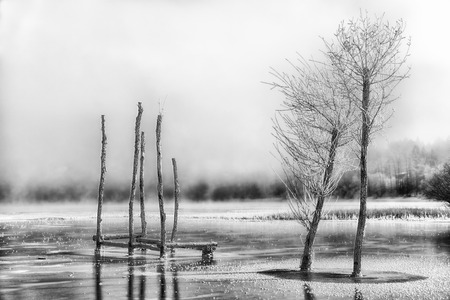 Frozen trees and foggy dark country, Lake Liptovska Mara in winter at Slovakia