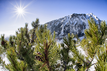 Creeping pine in High Tatras mountains and shinning sun and blue sky