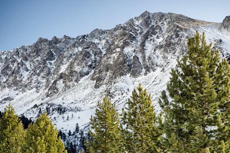mountainscape: Fir trees in forest and hill at High Tatras mountains, Slovakia