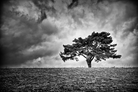 Lonely fir tree on horizon. Dark clouds on the sky Stock Photo