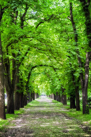 Alley of trees in Kerepesi cemetery, Budapest - Hungary