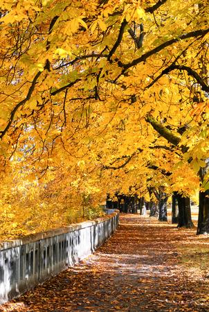 Kleurrijk de herfstpark met gele kastanjebomen