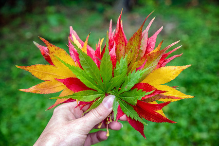 Colorful leaves in hand of woman. Autumn specific