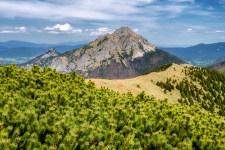 Hill Rozsutec in Mala Fatra national park, Slovakia. Scrub and mountainscape