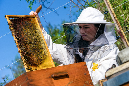 Beekeepeer holding a frame with honeycomb and bees
