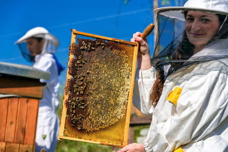 Honeycomb with honey and bees. Beekeeping Stok Fotoğraf