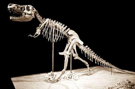 Dinosaur skeleton - Taubosaurus Bataar on black background