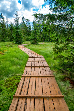 Education trail through bogland which a wetland that accumulates peat in location Slana Voda, Slovakia