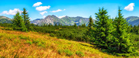 Summer mountain panoramic landscape with coniferous trees and high hills in Western Tatras, Slovakia