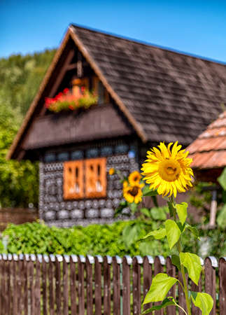 Sunflower over old cottage. Traditional houses with ornament paint  in village CIcmany, Slovakia