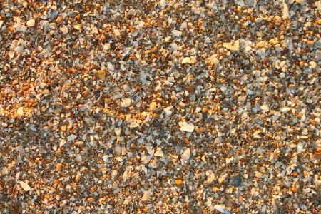 Sand shell Stock Photo - 16392572
