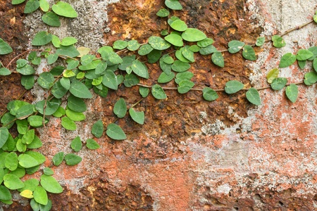 Green leaves on old brick wall