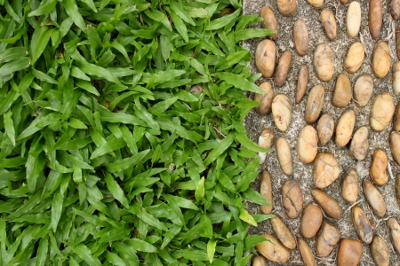 pebble stone and grass texture on walkway photo