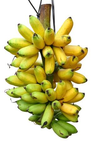 banana tree: Banana bunch Stock Photo