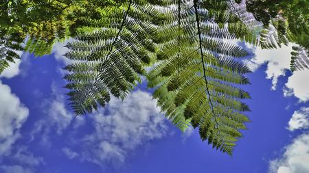 helechos: En virtud de helechos y Blue Sky