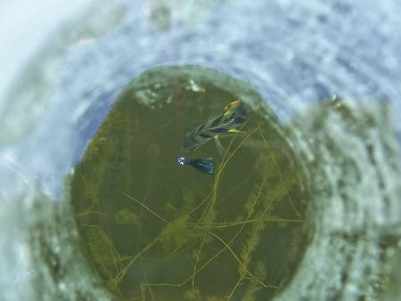 ice fishing: Ice Fishing Hole Stock Photo
