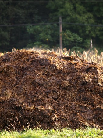 manure: cow manure heap Stock Photo