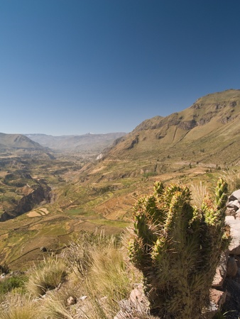 terracing: Panoramic view of the Colca Canyon. Peru
