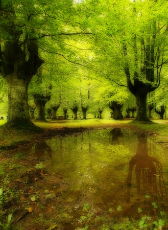 sunbeam in green forest with water reflection photo
