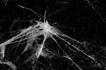 Spider web with 6 threads leading to the middle point connecting everyting in black and white