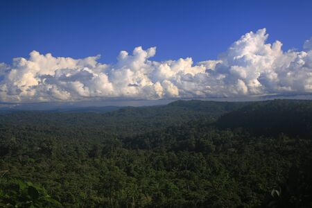 Tropical rainforest as far as the eye reached with a clouded sky