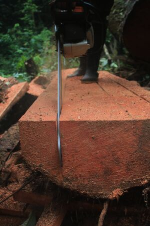 A tree trunk il-legally being cut on the forest floor of a tropical forest with a chainsaw