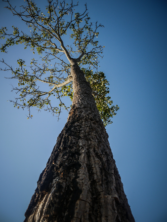 Big tree and blue sky