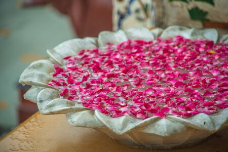 pink rose on water in jar at jaipur