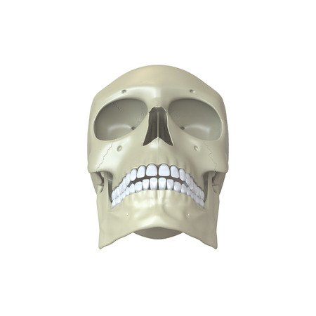 eye sockets: Rendered human skull