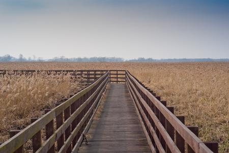 swamps: Wooden bridge on swamps