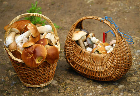 mushrooms from the forest,